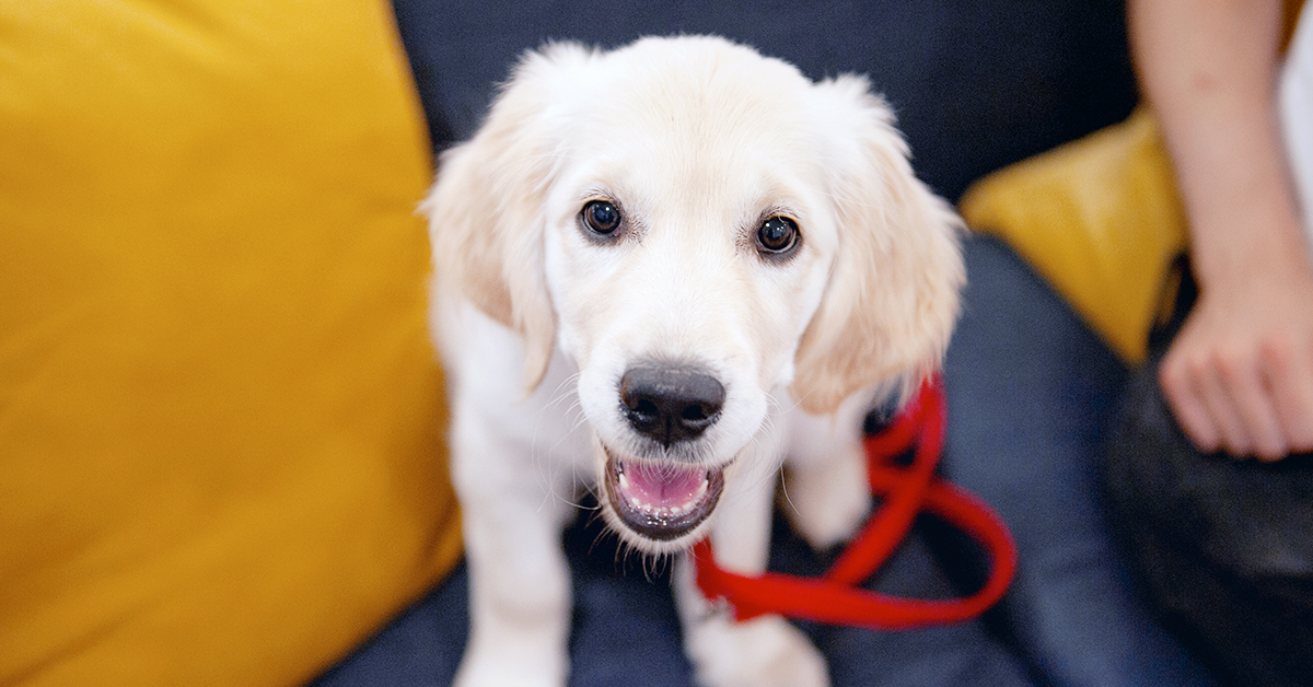 Tails Com Top Tips For Training Your New Puppy