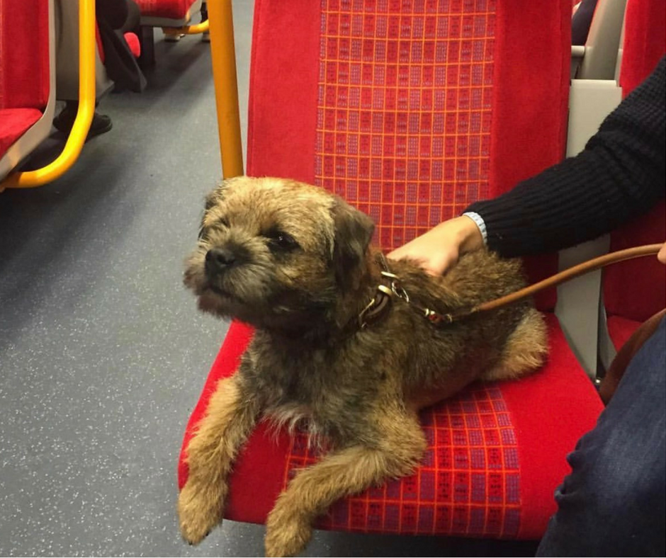 monty-on-the-train