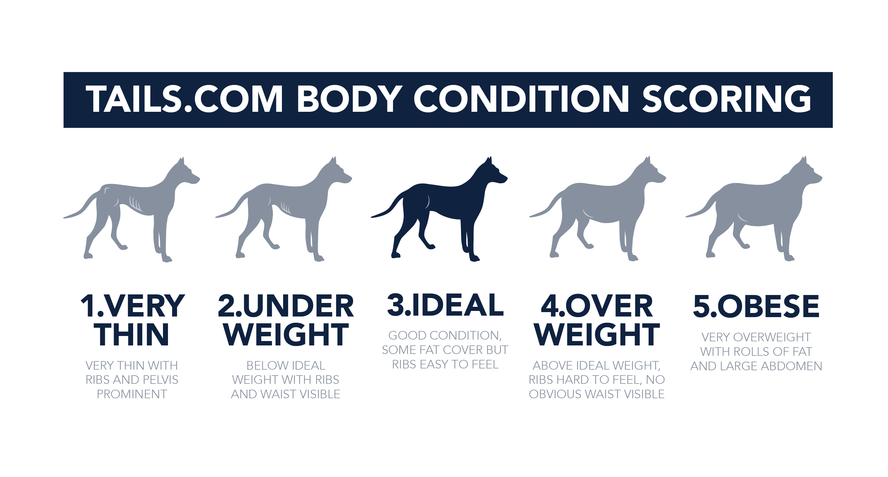 141028_TAILS_body condition table-01.jpg
