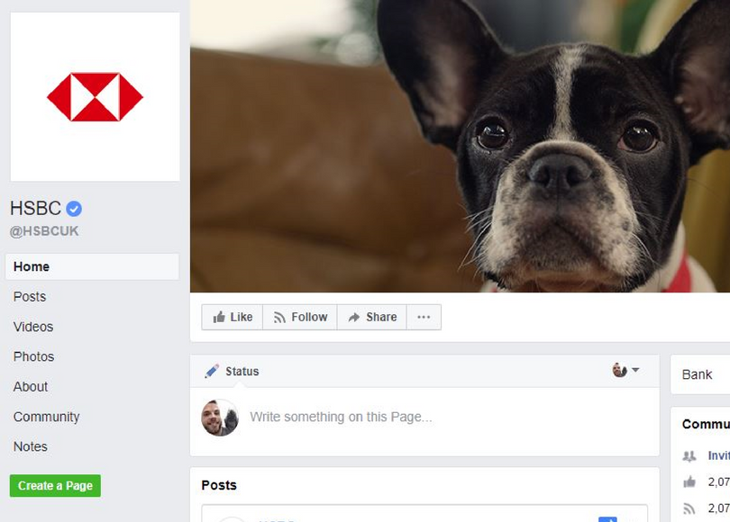 BLOG SIZE_ How brands can tackle the brachycephalic dog dilemma.png